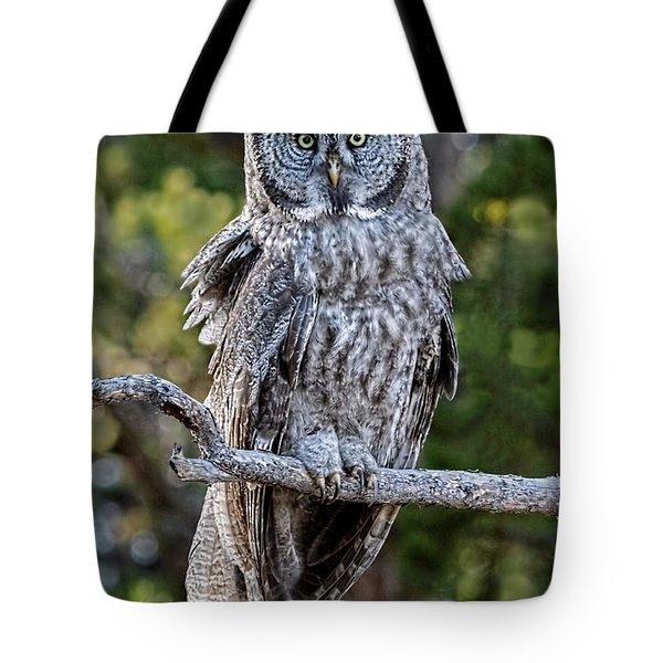 Great Grey Owl Yellowstone Tote Bag