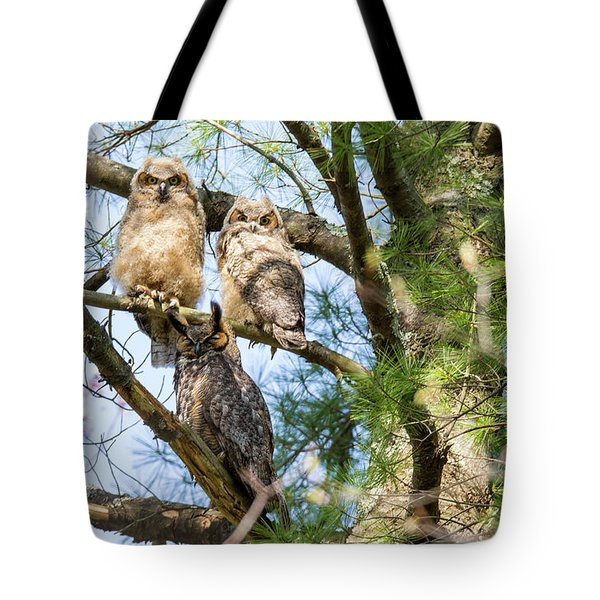 Great Horned Owl Family Tote Bag