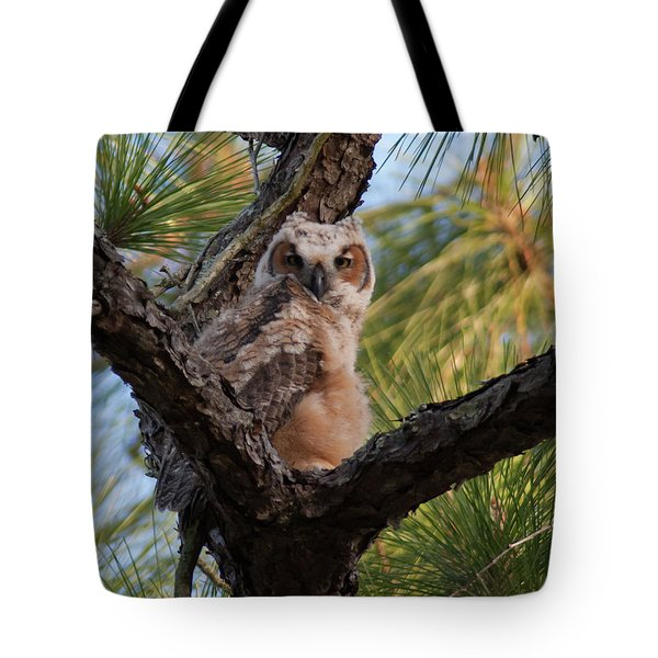 Great Horned Owlet Tote Bag by Paul Rebmann