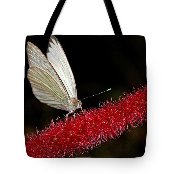 Tote Bag featuring the photograph Great Southern White by Judy Vincent