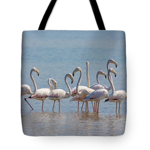 Greater Flamingos, India Tote Bag