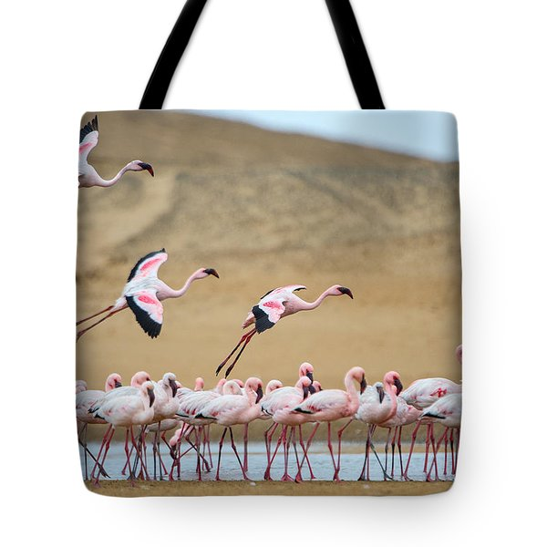 Greater Flamingos Phoenicopterus Tote Bag