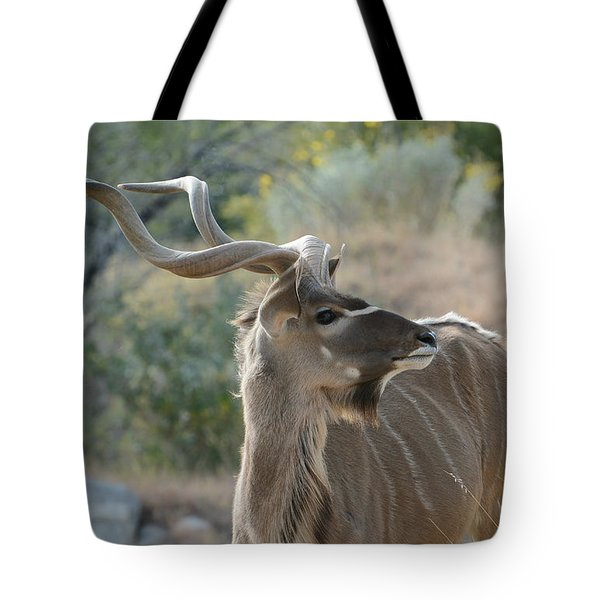 Tote Bag featuring the photograph Greater Kudu 4 by Fraida Gutovich