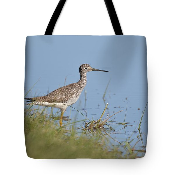 Tote Bag featuring the photograph Greater Yellowlegs by Kathy Gibbons