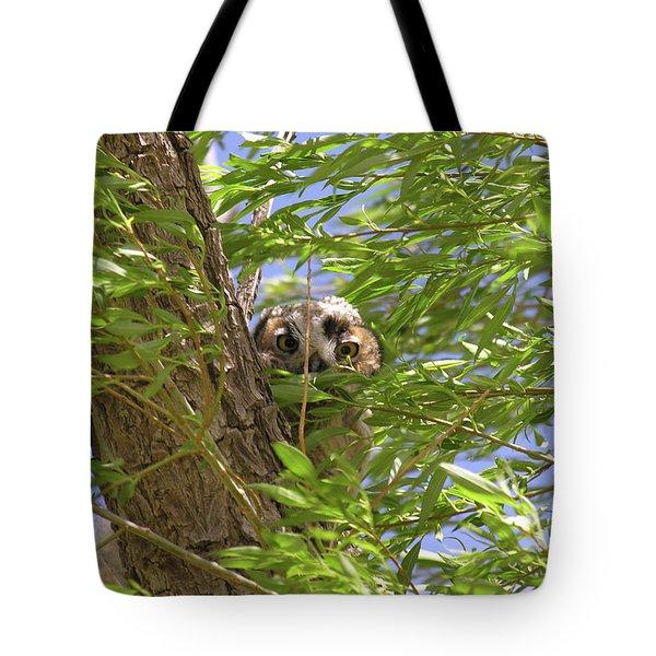 Greathornedowlchick1 Tote Bag