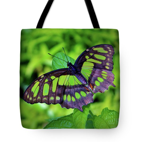 Green And Black Butterfly Tote Bag