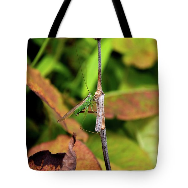 Tote Bag featuring the photograph Green Conehead Cricket Holding Twig by Scott Lyons