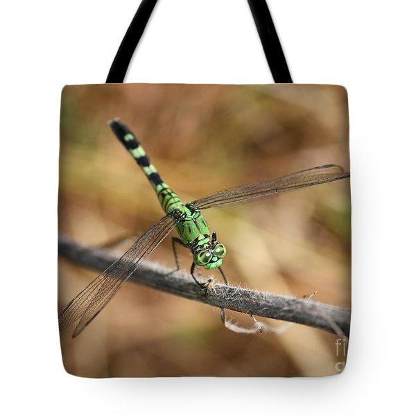Green Dragonfly On Twig Tote Bag by Carol Groenen