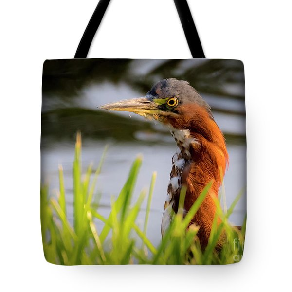 Green Heron Closeup  Tote Bag