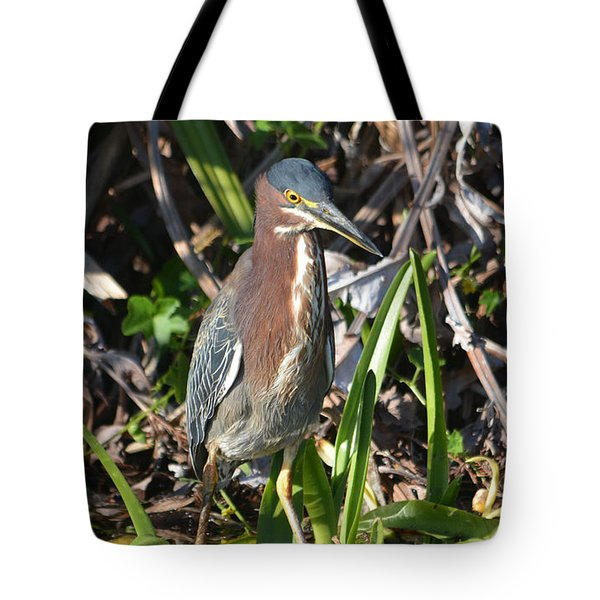 Tote Bag featuring the pyrography Green Heron Everglades by Sally Sperry