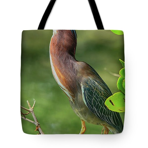 Tote Bag featuring the photograph Green Heron Pose by Deborah Benoit