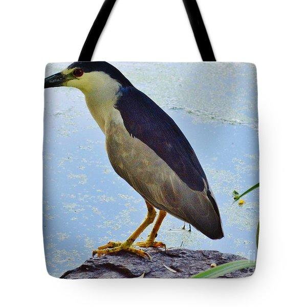 Black- Crowned Night Heron Tote Bag
