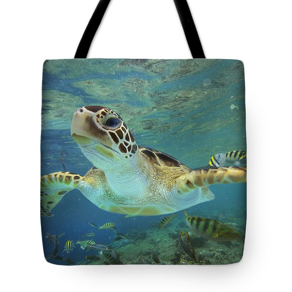 Tote Bag featuring the photograph Green Sea Turtle Chelonia Mydas by Tim Fitzharris