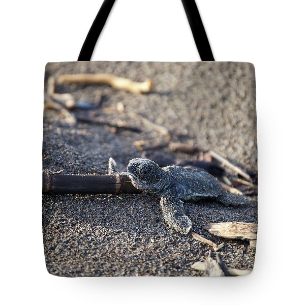 Green Sea Turtle Hatchling Tote Bag
