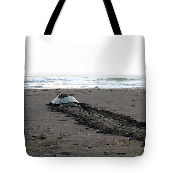 Tote Bag featuring the photograph Green Sea Turtle Returning To Sea by Breck Bartholomew