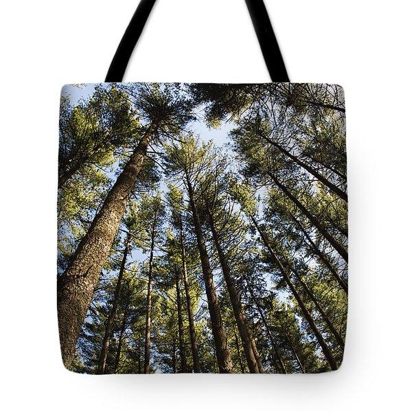 Greenbank Pines Tote Bag