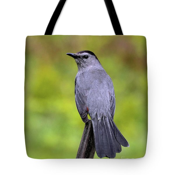 Tote Bag featuring the photograph Grey Catbird by Debbie Stahre