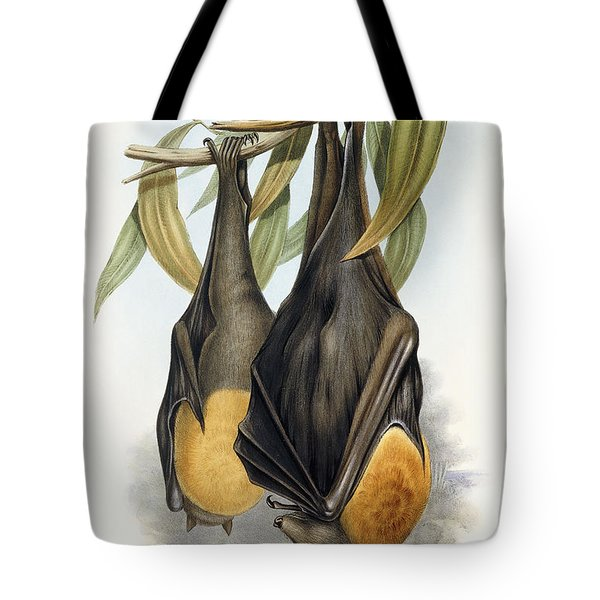Grey Headed Flying Fox, Pteropus Poliocephalus Tote Bag by John Gould