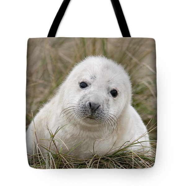 Grey Seal Pup Tote Bag