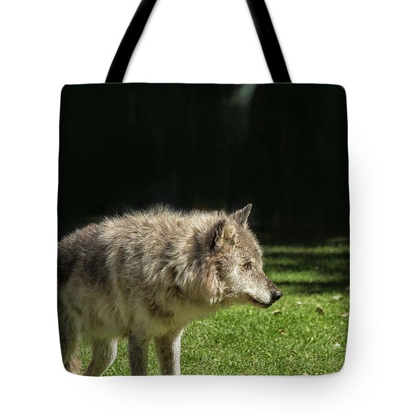 Grey Wolfe In Close Up Tote Bag