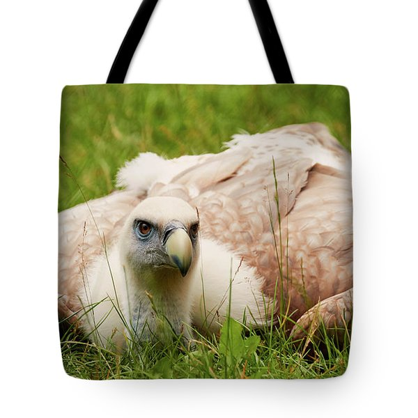 Griffon Vulture Tote Bag