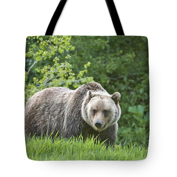 Grizzly Bear Tote Bag by Gary Lengyel