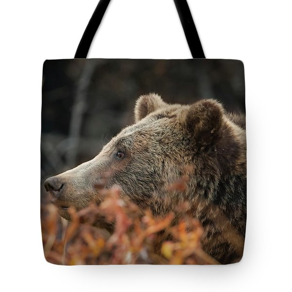 Grizzly Bear Portrait In Fall Tote Bag
