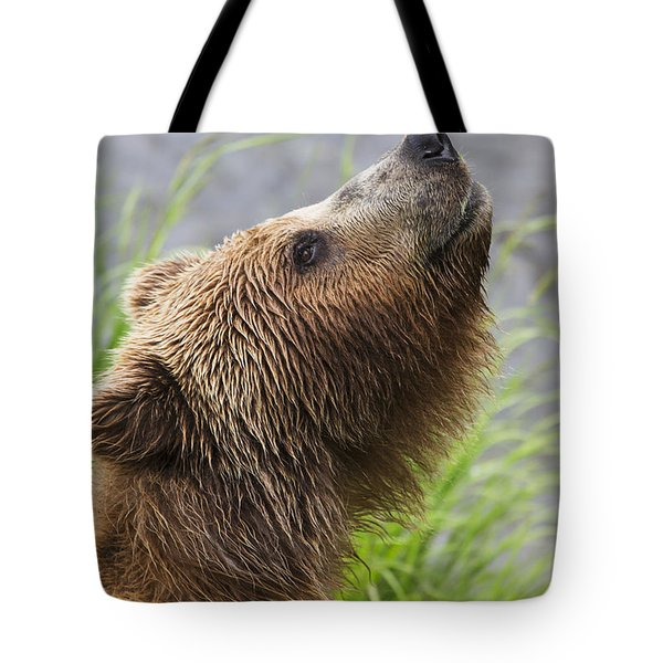 Grizzly Bear Sniffing Air While Fishing Tote Bag by Lucas Payne