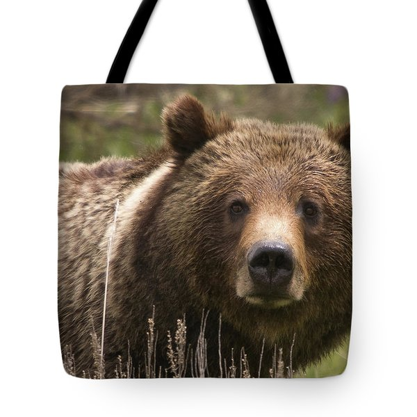 Grizzly Portrait Tote Bag