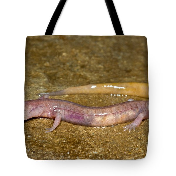 Grotto Salamander Tote Bag