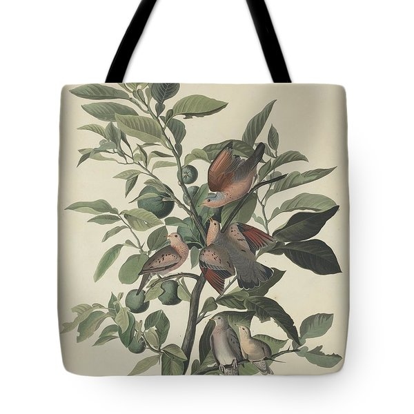 Ground Dove Tote Bag by Rob Dreyer