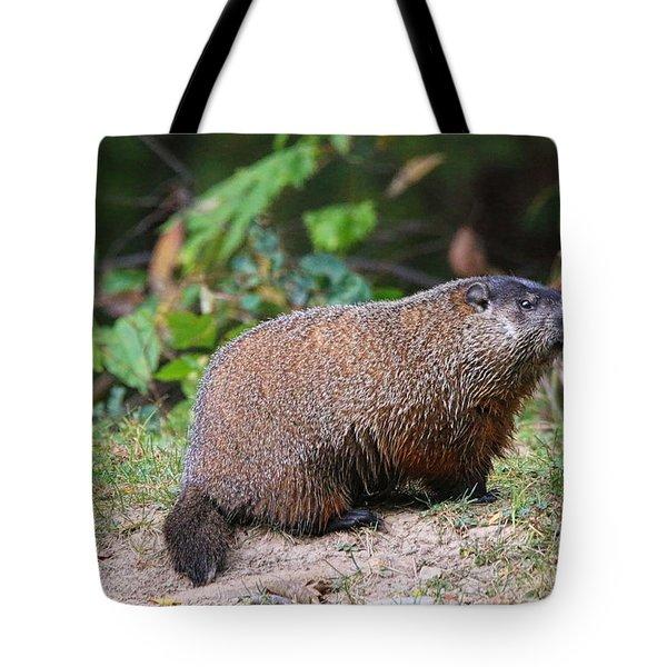 Groundhog  0590 Tote Bag by Jack Schultz