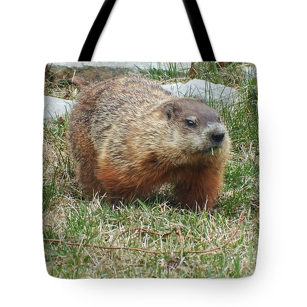 Tote Bag featuring the photograph Groundhog by Vicky Tarcau