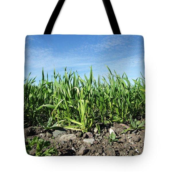 Tote Bag featuring the photograph Growing Corn Closeup by Kennerth and Birgitta Kullman