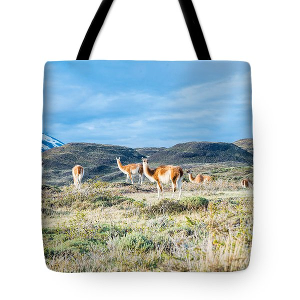 Guanaco In Patagonia Tote Bag