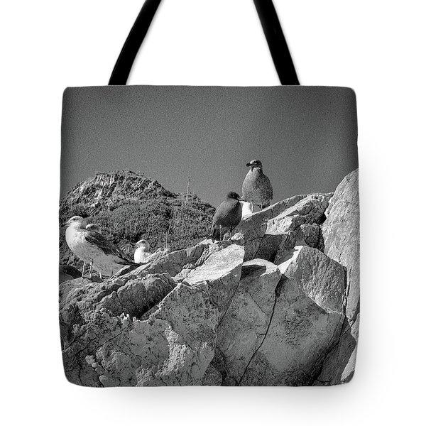 Tote Bag featuring the photograph Gulls On Guard - Pt Mugu, California by Samuel M Purvis III