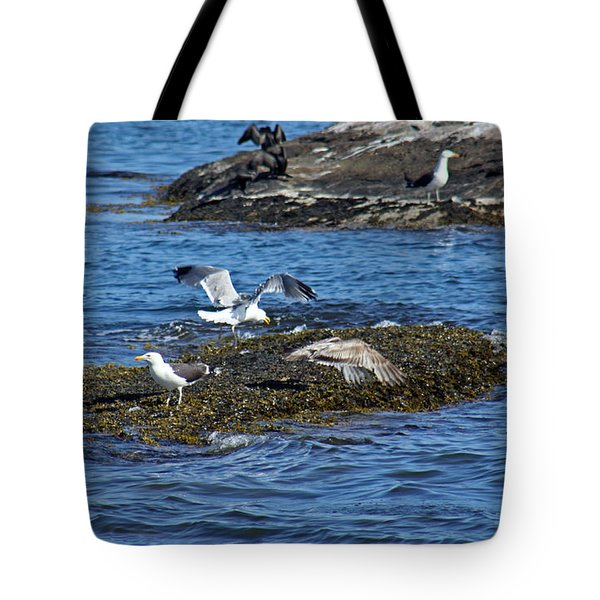 Gulls On Rocks 1 Tote Bag