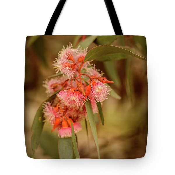 Tote Bag featuring the photograph Gum Nuts 2 by Werner Padarin