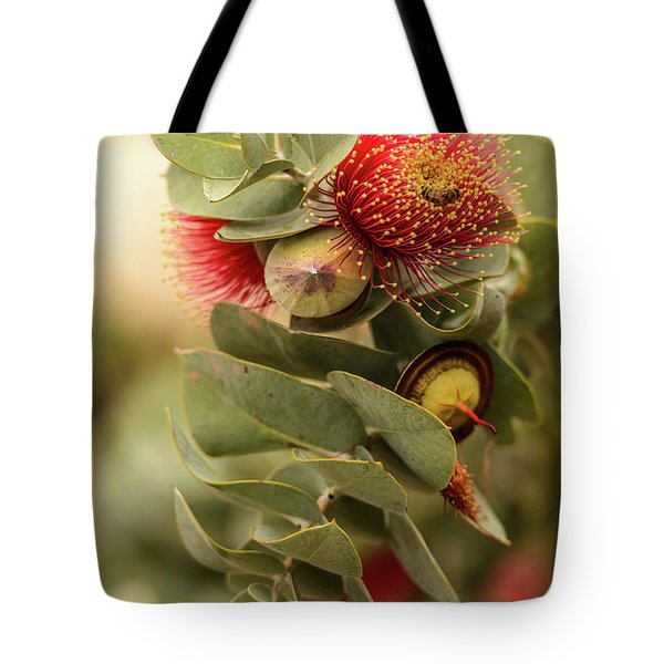 Tote Bag featuring the photograph Gum Nuts by Werner Padarin