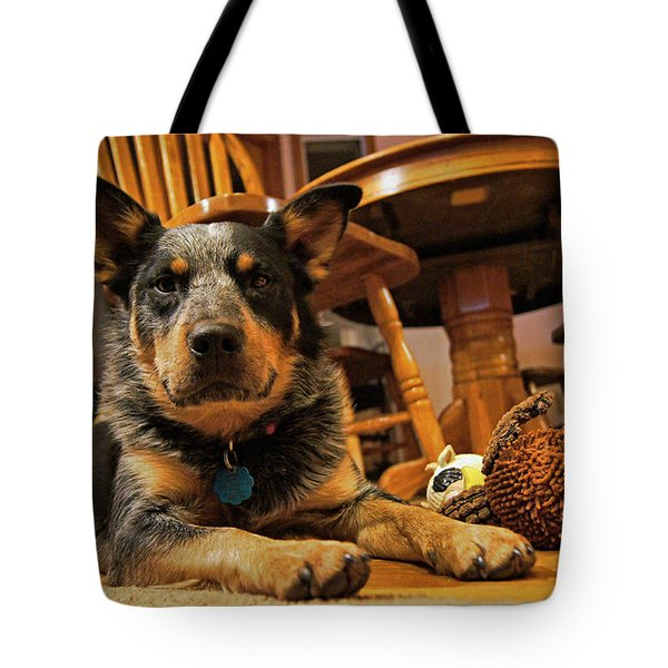 Tote Bag featuring the photograph Gunner The Blue Heeler by Cricket Hackmann