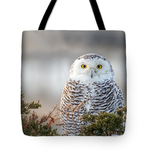 Hampton Beach Nh Snowy Owl Tote Bag