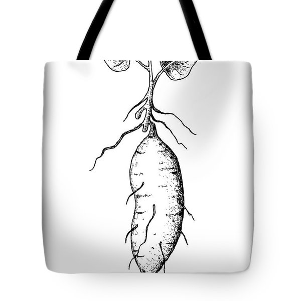 Hand Drawn Of Sweet Potato On White Background Tote Bag