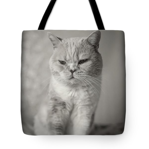 Handsome Cat Tote Bag by Aiolos Greek Collections