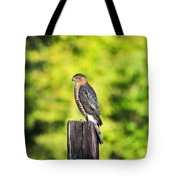 Tote Bag featuring the photograph Handsome Hawk by Al Powell Photography USA