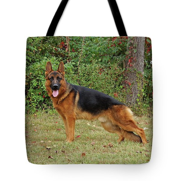 Tote Bag featuring the photograph Handsome Rocco by Sandy Keeton