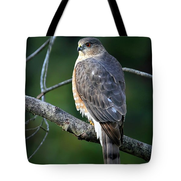Handsome Sharp Shinned Hawk Tote Bag