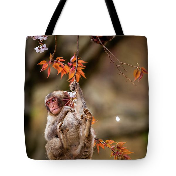 Tote Bag featuring the photograph Hang In There, Baby Redux by Rikk Flohr