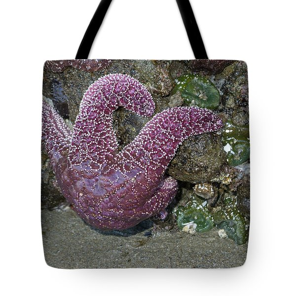 Hanging Out At The Beach Tote Bag