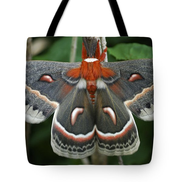 Happy Birthday Tote Bag by Randy Bodkins