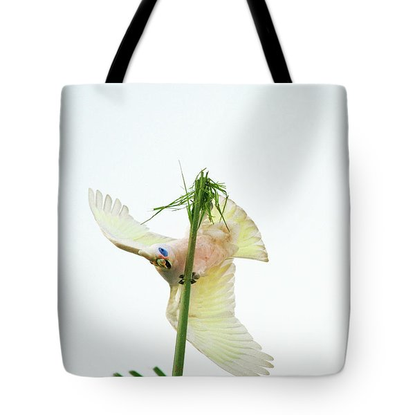 Happy Corella 3 Tote Bag